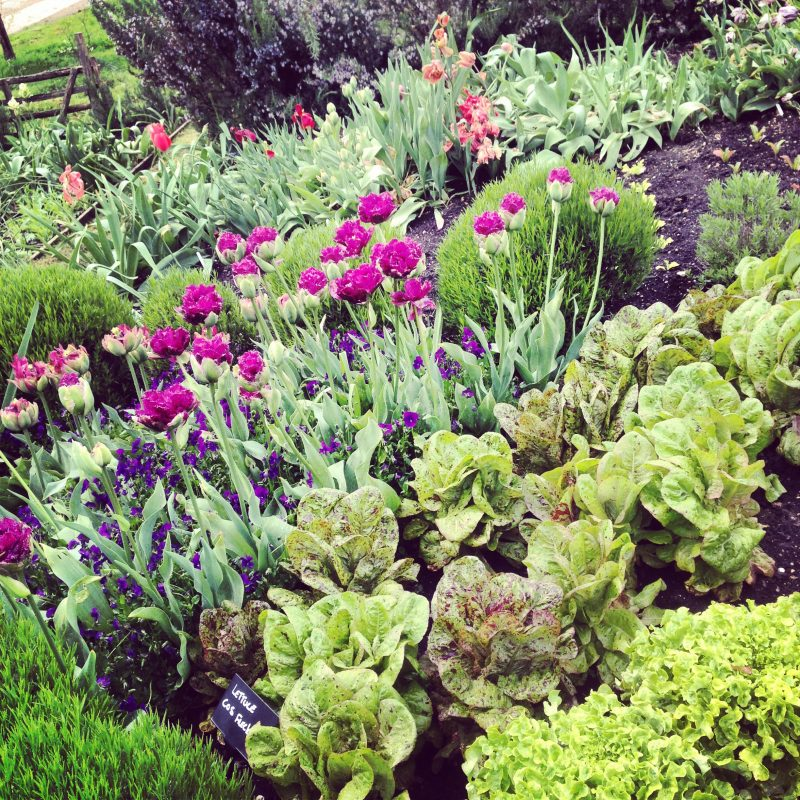 Sarah Raven tulips