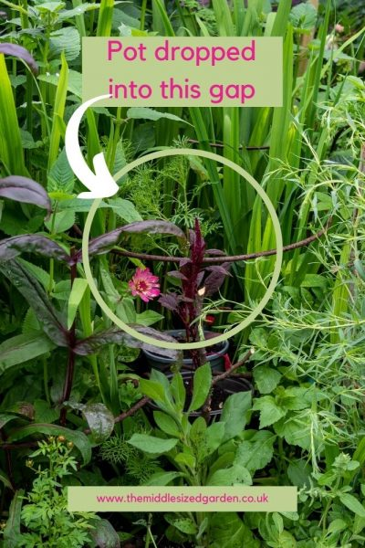 Drop a pot into the border to add more flower colour