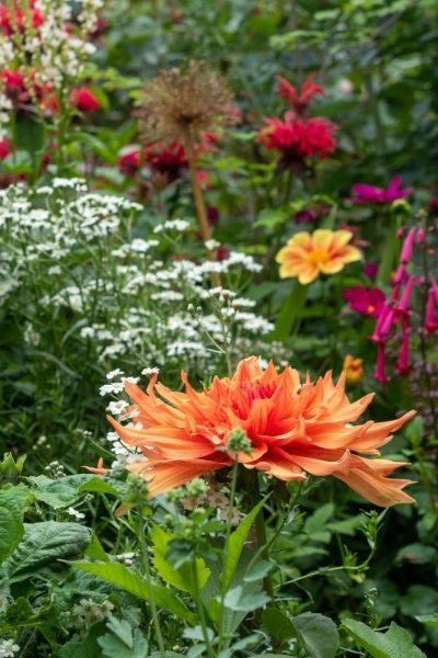 flower border in august