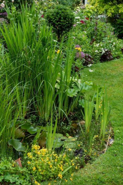 Mini garden pond