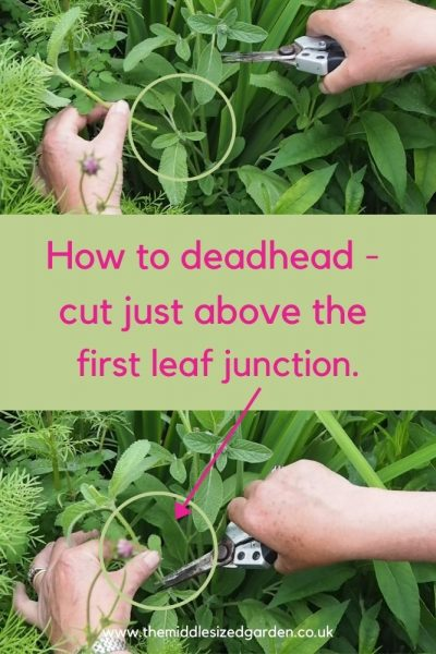 How to dead head flowers