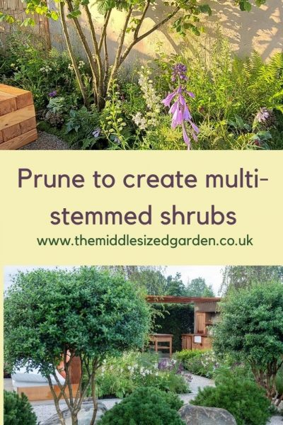 Multi-stemmed trees and shrubs add light