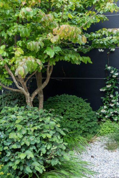Garden design tip - plant evergreens in a small garden