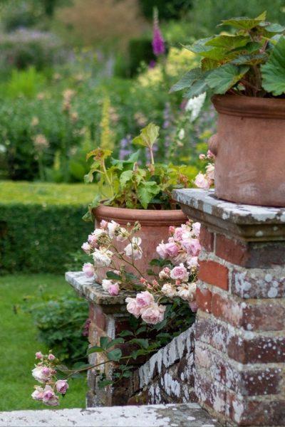 Rose 'Felicia' in the Sunk Garden