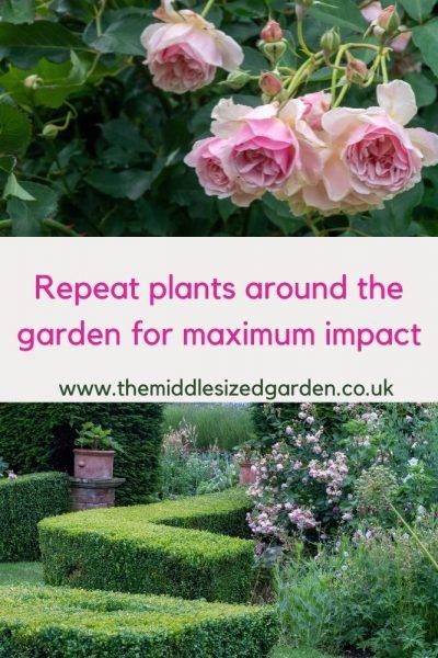 Repeat perennial flowers for maximum impact