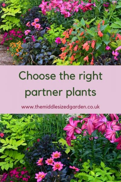 Dahlias and other plants in pots