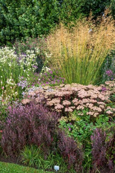 How to partner plants in a perennial border