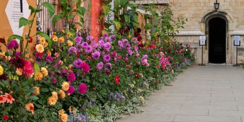 Keep dahlias free of earwigs, slugs and snails without chemicals