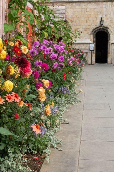 Dahlia border at Canterbury Cathedral