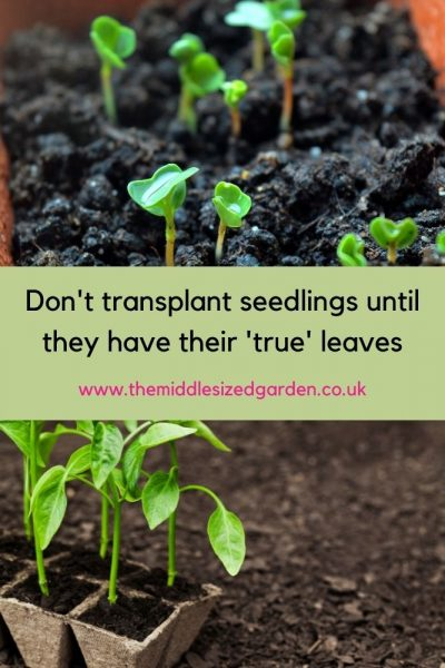 How to handle seedlings