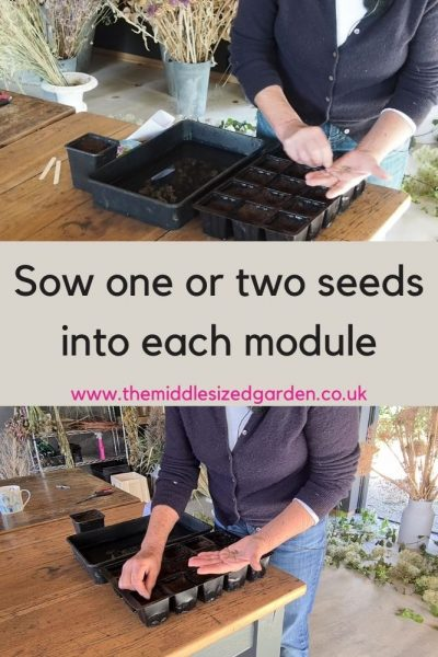 Sow one or two seeds per module