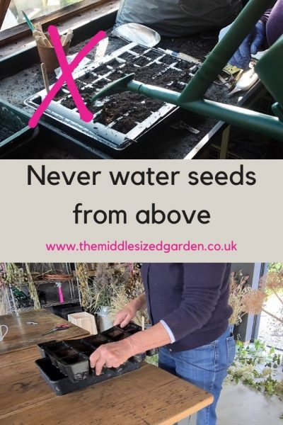 Always water seeds from below.