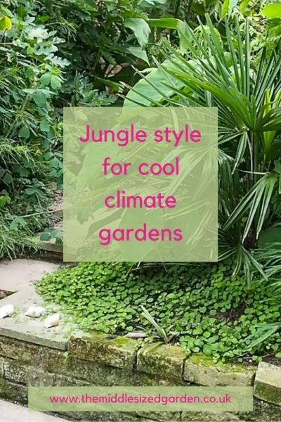 jungle style for cool climate gardens