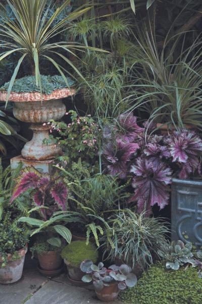 The Potted Jungle
