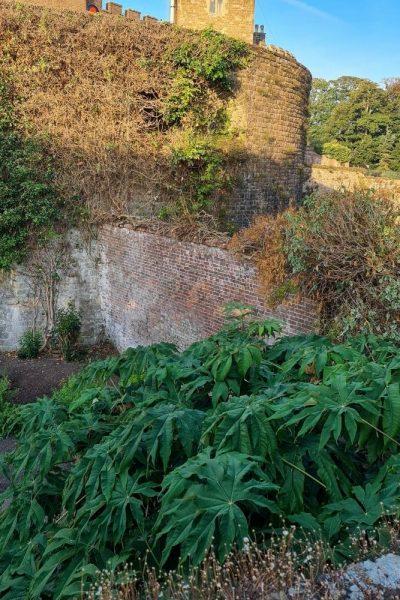 Jungle garden in Walmer Castle moat