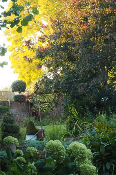 Trees absorb pollution, improve air quality and support wildlife #sustainableliving #garden