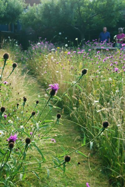 Perennial meadow garden in July