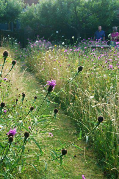 Perennial meadow garden in July