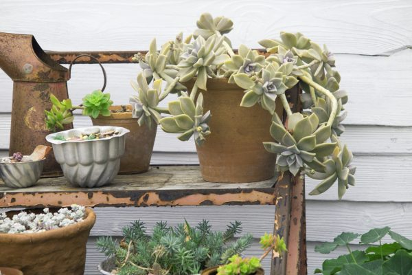 Upcycled kitchenware used as garden pots