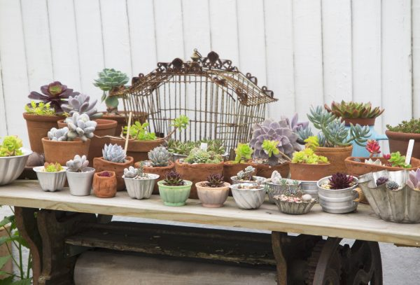 A seaside garden display of succulents