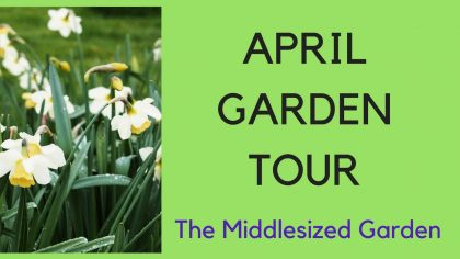 Garden tour - The Middlesized Garden in April