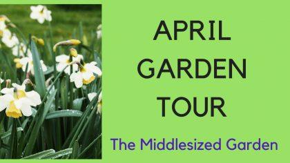 Garden tour - The Middlesized Garden in April