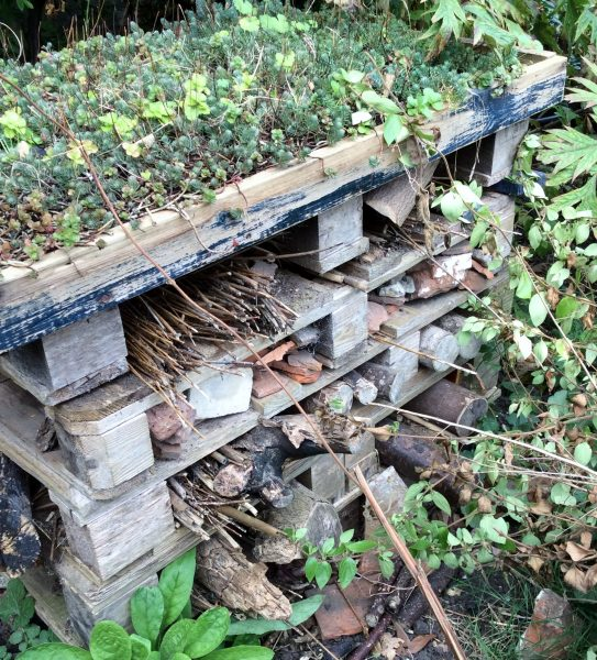 Bug hotel with a green roof