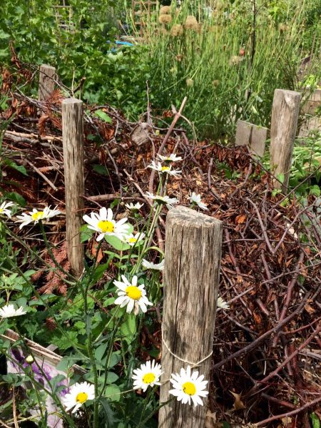 Use prunings to help wildlife with a 'dead hedg'e.