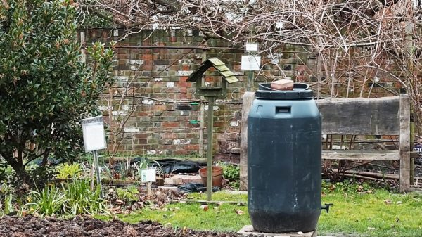 Water butts in the middle of the garden