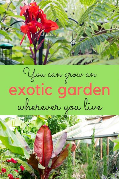 How to create a tropical garden in a cool climate