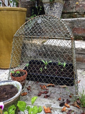 Anti-rabbit cloches