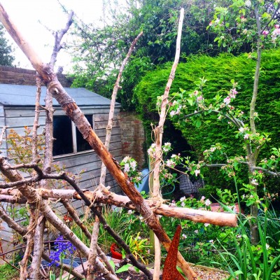 Salvaged branches used as bean supports