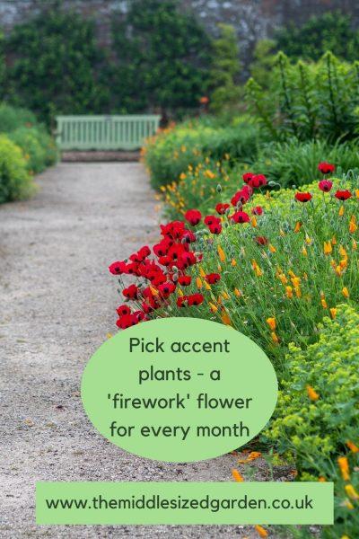 Accent colours in a garden border