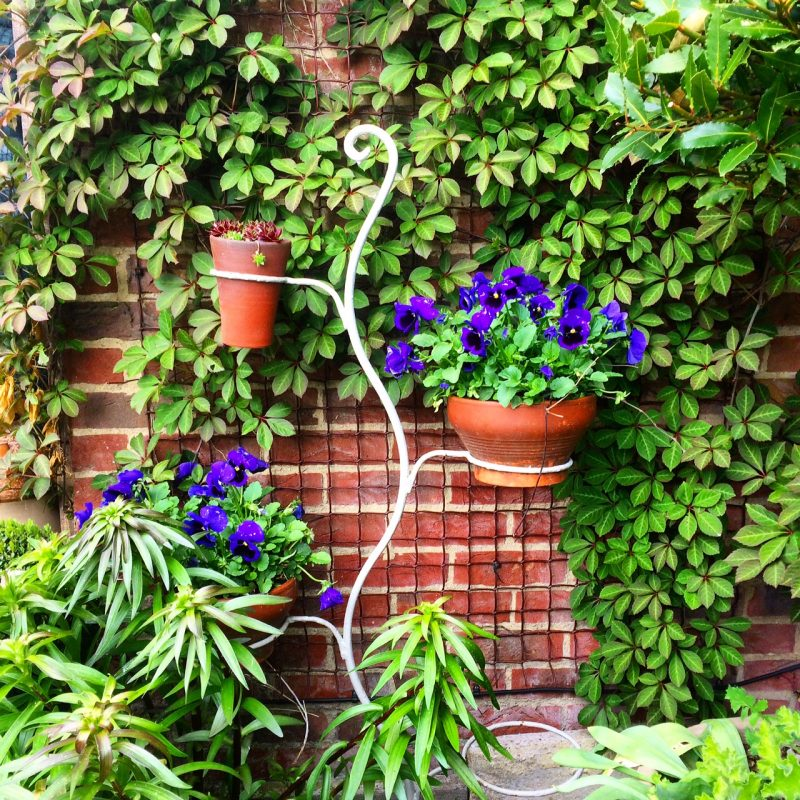 Plants on pot stands dry out - quickly, so water regularly.