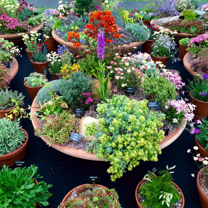 Plant alpines and sempervivums in shallow containers