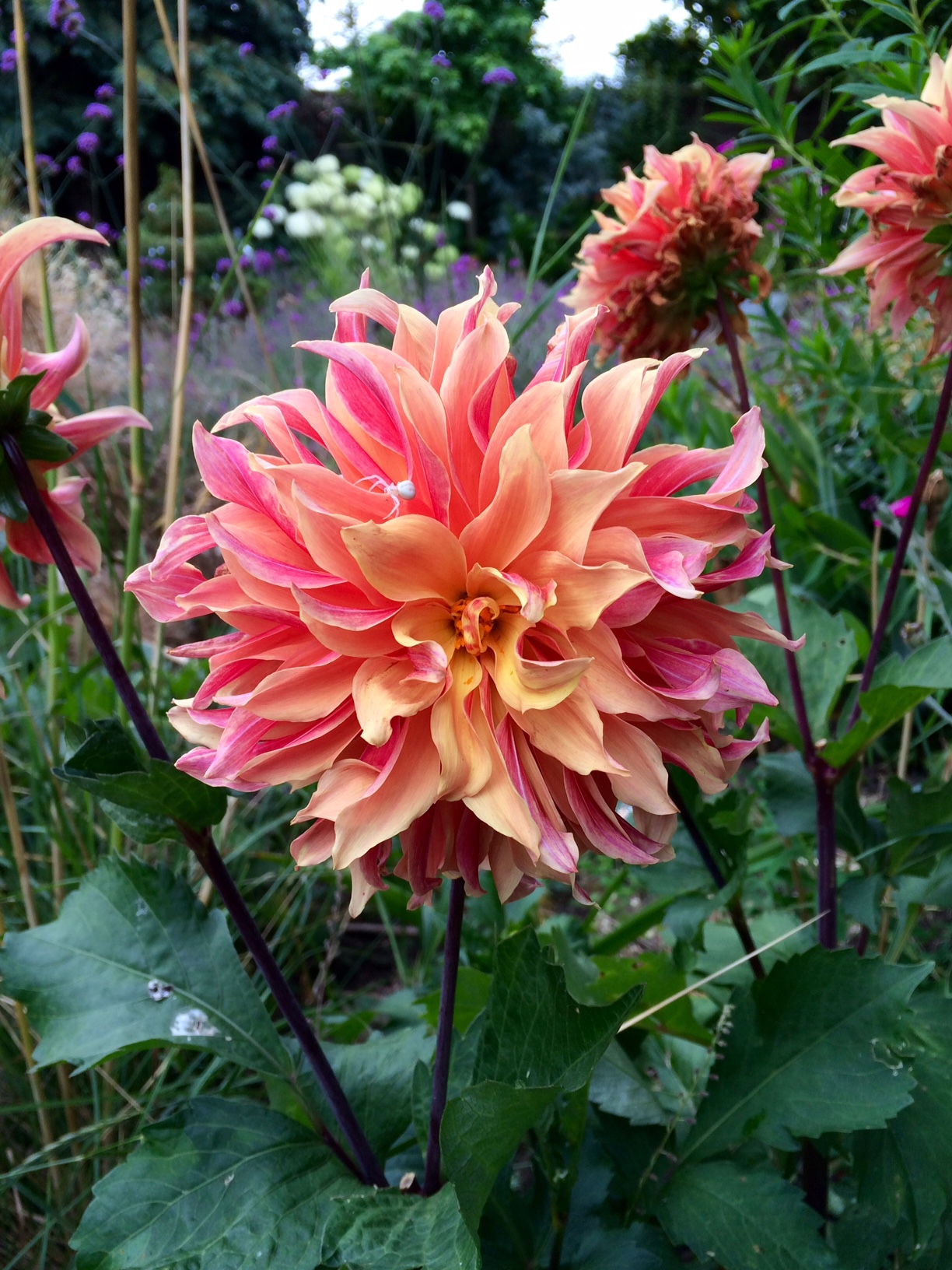 Summer Flowers to Plant Garden
