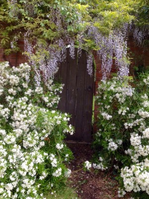 Wisteria over a garden door
