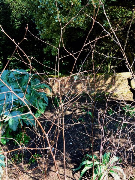 Make a birch twig cage support