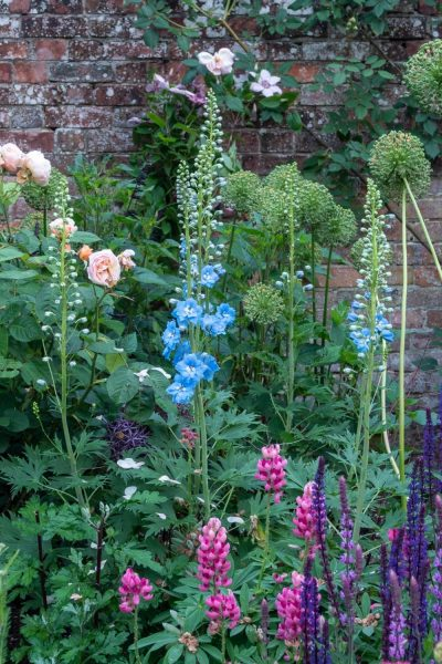 Traditional English country garden flowers