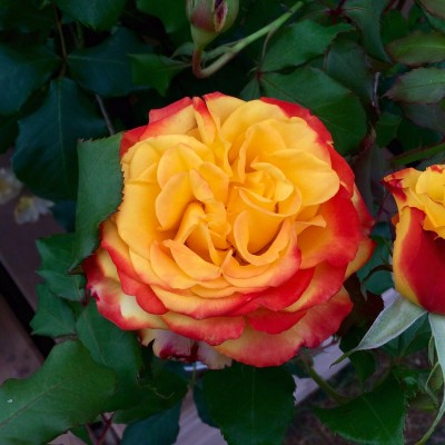 Tequila Sunrise vibrant rose