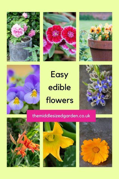 Easy edible flowers