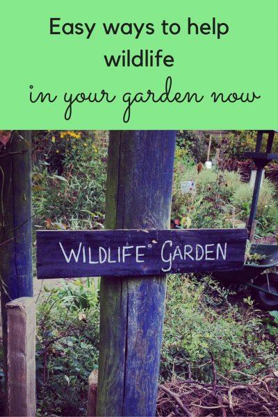 Easy ways to help wildlife in your garden now