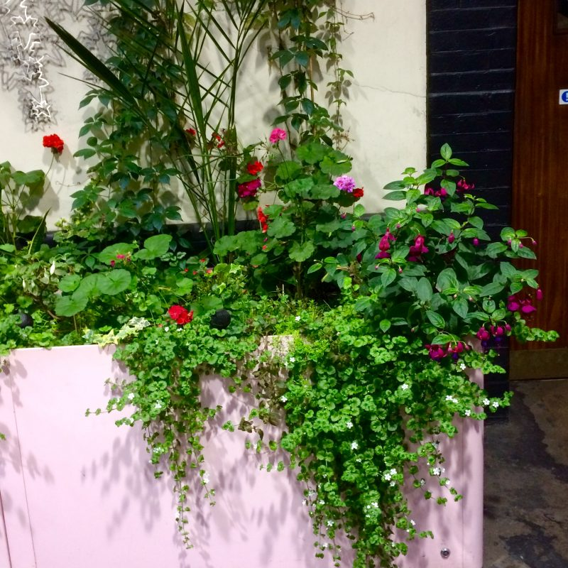 Pale pink planter