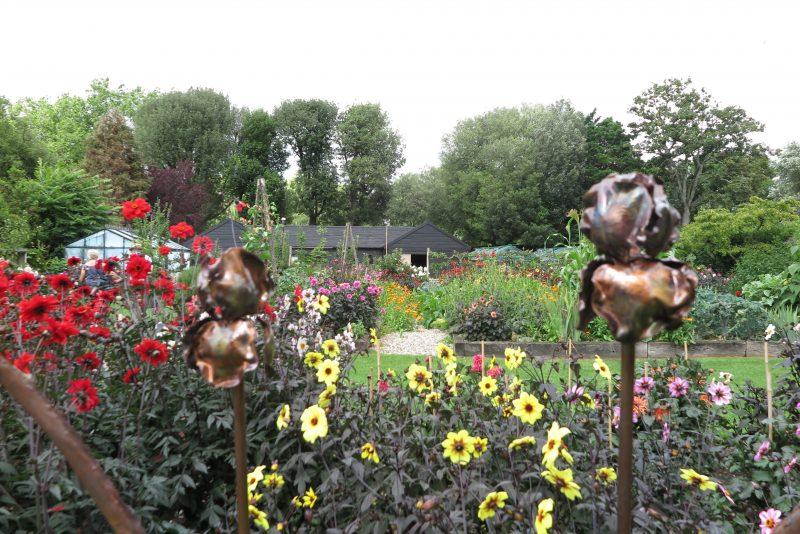 Dahlia ideas for your garden or back yard