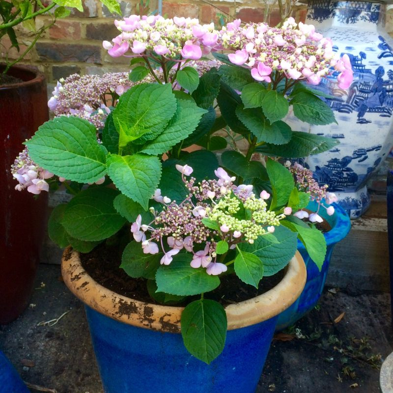 Think about the colour of your pot when choosing plants.