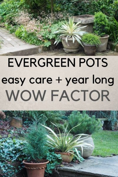 Evergreen pots for year round wow factor
