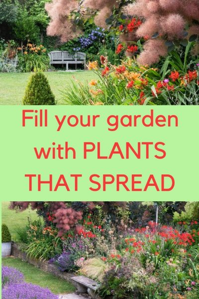Plants that spread make for low maintenance gardening!