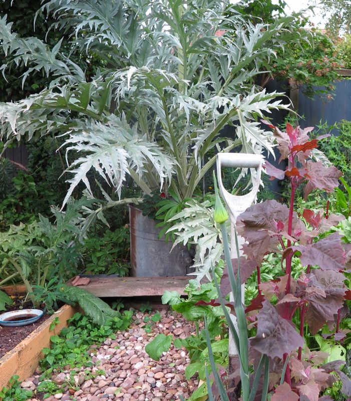 Ideas for veggies in pots