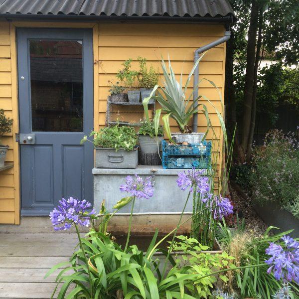 Francine Raymond's garden