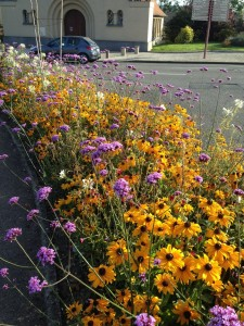 French street planting of rudbeckia, verbena bonariensis and white cleome